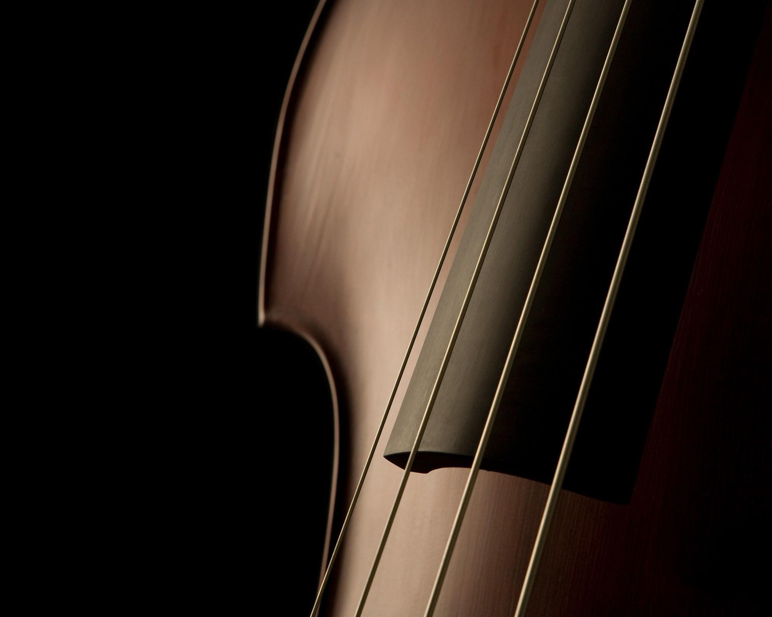 Фото: Струнный музыкальный инструмент